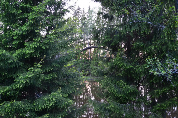 11,05, mellan träd